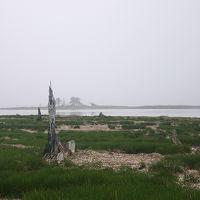 廃止間近の特急「まりも」号で道東へ(その2、納沙布岬から野付半島を通って網走へ)