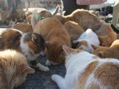 瀬戸内のネコの島~愛媛 青島で猫にまみれてきました~ vol.2 ネコの楽園編