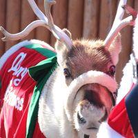 もうすぐクリスマスの東武動物公園とイルミネーション(1)トナカイのハナちゃんのキャラバンとクリスマス・アニマルパレード&ふれあい動物の森の仲間たち