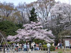 桜咲く、神代植物公園
