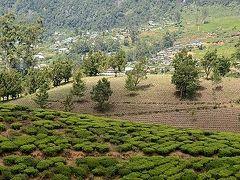 ★スリランカ車旅(11) 新年は茶畑の中で