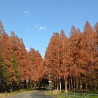 水元公園の紅葉、しばられ地蔵尊