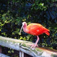 <山陰&山陽・ご縁旅・7>大荒れでも行くんです!「稲佐の浜」&「鳥の楽園」を貸切り??