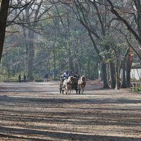 糺の森を馬車が進む