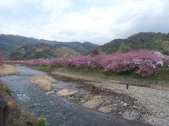 2013年 春:早咲きの桜、河津桜を鑑賞に伊豆の河津へ