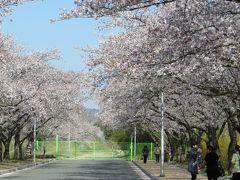 2013春、韓国旅行記26(7):4月9日(5):慶州、仏国寺、ハクモクレン、普門湖、染井吉野、散歩のワンちゃん