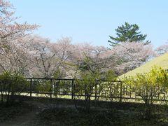 2013春、韓国旅行記26(9):4月9日(7):慶州、古墳公園、天馬塚、山茱萸と連翹の花、欅と楓の新緑