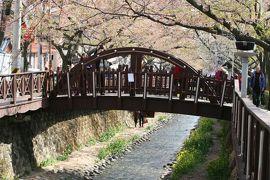 2013春、韓国旅行記26(14):4月9日(12):鎮海、余佐川の染井吉野、川沿いの屋台、河川敷の菜の花