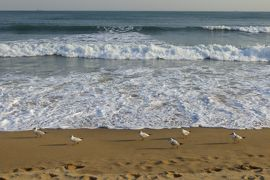 2013春、韓国旅行記26(16):4月9日(14):釜山、海雲台ビーチ、観光案内、ユリカモメと白波、モニュメント