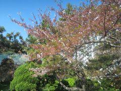 2013春、韓国旅行記26(18):4月10日(1):釜山で泊ったホテル、バス中から桜見学、金海空港へ