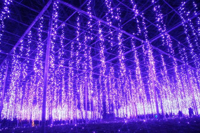 ほんとは写真なんて撮っている場合ではなかったです、あしかがフラワーパークの大藤のイルミネーシヨン!<br />あたりがいったん真っ暗になったあとに、期待とムードを高める音楽が流れ、ぱっと花開いた光の大藤。<br />紫の光の藤が幾重も幾重も幻想的に重なり、何度見てもほぉ~っとため息が出ました。<br /><br />ほんとは、写真の小さなファンダーの中にとても収め切れるものではありませんでした。<br />見ているだけの方が、断然よかったです!<br />しかし、それでも撮らずにはいられないカメラフェチのファナティックな私。<br />なかなか使う機会のない一脚は、ここでやっと出番を迎えました。<br />大藤のイルミネーションは音楽にあわせて動くイルミネーションだったので、同じポジションをとったまま、光の変化をとらえることにもチャレンジしてみたのです。<br /><br />動画で取れば簡単でしょうけれど、そこはほれ、その瞬間をパチリと捉えようとチャレンジするのが面白くて。<br />少しずつ変化した写真を紙芝居みたいに並べるのがアナログ的で面白くて。<br />というか、動画はまた別の技術が要りそうですし、メモリの残量も気になるので、チャレンジしていないだけですけどネ。<br /><br />それにしても、やっぱり藤のイルミネーションがあってこそ、あしかがフラワーパークのイルミネーション!って思いました。<br />大藤が1番圧巻でしたが、黄花藤や白藤のトンネルも、桃色で八重咲藤を思い出させた藤棚なども、どれもとてもステキでした。<br /><br /><ついに訪れた、あしかがフラワーパークの関東三大イルミネーションの旅行記の構成><br />□(1)3時間かけてJR富田駅からアクセス~日没前のプロローグ<br />□(2)リズミカルステージ~レインボーマジック~スノーワールド~光のピラミッド<br />■(3)イルミネーションの藤棚~夢のような奇蹟の大藤に黄花藤・八重藤・白藤<br />□(4)光と共に甦る日本の四季「こころの故郷」~かわいい動物いっぱいの「みんなの地球」<br /><br />あしかがフラワーパーク公式サイト<br />http://www.ashikaga.co.jp/index2.html<br />イルミネーション「光の花の庭」<br />2013年10月26日~2014年1月26日開催<br /><br /><タイムメモ><br />13:00頃 家を出る<br />14:11 大宮駅発JR宇都宮線に乗る<br />15:01 小山駅着<br />15:09 小山駅発JR両毛線に乗る<br />15:41 富田駅到着<br />16:05頃 あしかがフラワーパーク到着<br />16:10~16:20 ショッピング<br />16:30~点灯<br />16:30~18:30 イルミネーション散策<br />18:30~18:40 屋台で軽食<br />18:40~20:40 イルミネーション散策<br />20:45頃 あしかがフラワーパークを出る<br />21:04 富田駅発JR両毛線に乗る<br />23:40頃 帰宅<br />