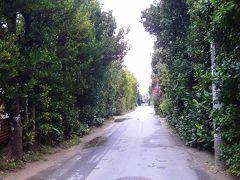 避寒旅行(103)・・・沖縄本島 備瀬のフクギ並木通り