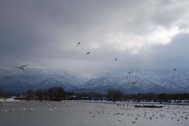 寒いの苦手だけど<br />思い切って行ってみて良かった冬の新潟。<br /><br />2日目は瓢湖で白鳥を見るのがメイン、<br />その他にも五泉で半身揚げを食べて<br />展望室から日本海を見て……<br />と、少々詰め込んじゃいました。