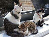 台湾 美味しいものと猫さんを探して