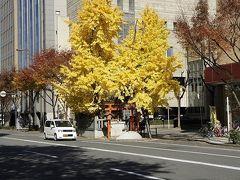 道中神木(みちなかしんぼく)熊野街道編+1 映画「プリンセス トヨトミ」に出演木も