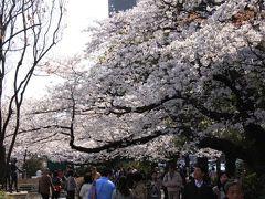 桜の東京見物 Virtual Tokyo walking tour in sakura season