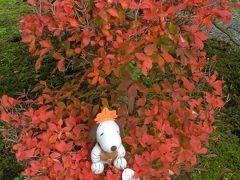 小堀遠州ゆかりの寺院『近江孤篷庵』◆2013年・湖北の紅葉めぐり≪その5≫