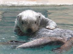 """傷心の一人旅・・・は・・・ """"鳥羽・志摩の水族館巡り"""" と """"伊良湖の菜の花"""" と """"英虞湾の絶景"""" に癒されて・・・"""