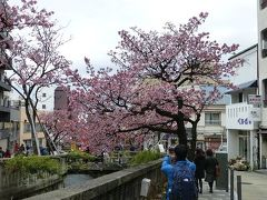 熱海の熱海桜が満開だというので出かけてみました