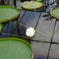 イルミ紀行(02)・・・花博記念公園 咲くやこの花館 上巻