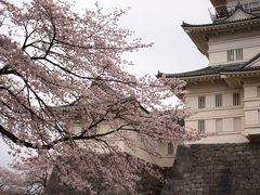 小田原城と桜と