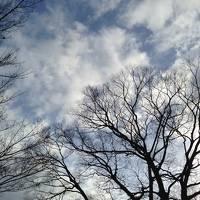 ひとりで歩く真冬の京都<一日目>