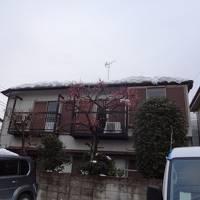 東京で迷子in下北沢