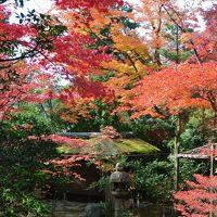 秋の京都~その1~錦市場・妙心寺