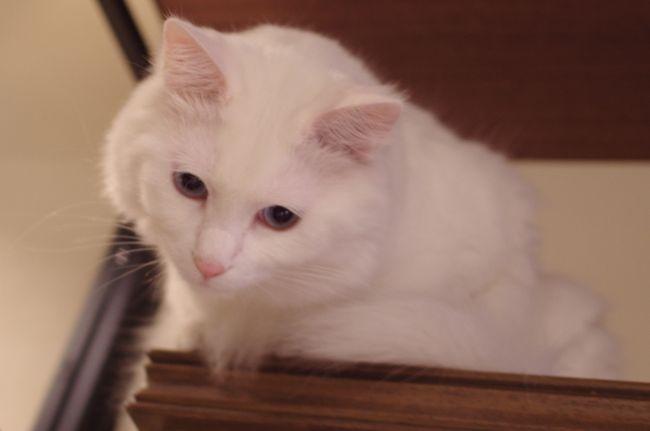 2月22日は「にゃん にゃん にゃん」で猫の日です。<br /><br />ニャンコな一日にしようと、猫カフェと今戸神社へ行きました。