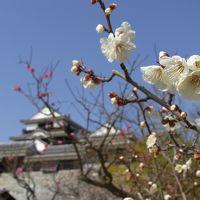 松山で温泉に入ろう - またまたPeachで日帰りの旅