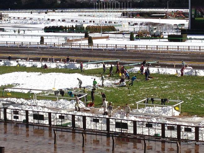 大雪のため東京競馬は中止。しかし京都競馬の馬券は売っているので、競馬場がどんな状況になったか見に行きました。