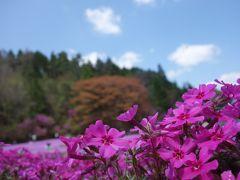 牡丹と芝桜
