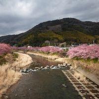 河津七滝&河津桜