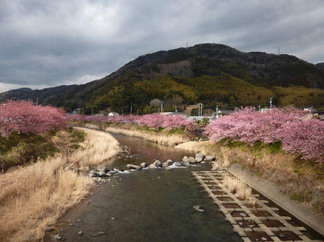 当初は西伊豆の山に登って富士山を観賞しようと思っていましたが、天候が芳しくなかったので、急遽予定変更し、東伊豆の河津で滝と早咲きの桜を見てきました。<br /><br /><行程><br />→熱海9:06→10:21河津(鉄道)<br />河津駅10:40→11:05河津七滝(バス)<br />河津七滝12:38→12:56踊り子温泉会館(バス)<br />河津駅15:56→17:11熱海→(鉄道)