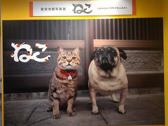 岩合光昭写真展「ねこ」と横浜にぎわい座