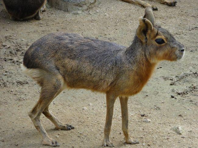 和歌山公園動物園に行ってきました。<br />「和歌山城」内にある「無料」の動物園です。
