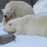 円山動物園ホッキョクグマ「ポロロ」と「マルル」を送る会 札幌ハンバーグの老舗 札幌牛亭