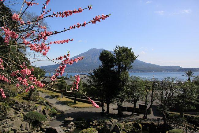 九州新幹線で行く早春の熊本・鹿児島ツアー(2日目)