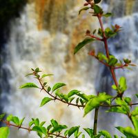 世界三大瀑布、イグアスの瀧、ブラジル側もすごいぞぉ~!(パラナ州/ブラジル)2