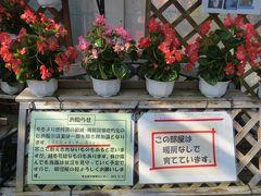 2014春、ほぼ満開の名古屋市農業センターの枝垂れ梅(4/5):温室から寒室に衣替え?