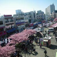 京急三浦海岸駅前、桜まつり