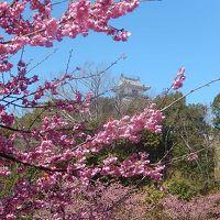 念願かなって掛川城を訪問する�掛川城公園