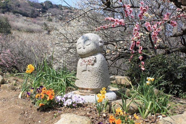今年の梅の開花は、例年に比べるとかなり遅れ、梅の開花情報では綾部山の梅林がやっと満開とのことで、天気がいいので出かけてきました。<br />綾部山梅林は、一目二万本・海の見える古墳群の中の梅林で有名なところです。<br />せっかく御津町に出かけるのならついでに美味しいカキをいただこうと思い、室津漁港にも足を伸ばし、昔ながらの町並みと美味しいカキをいただいてきました。<br />今日は天気も良く最高の一日になりました。