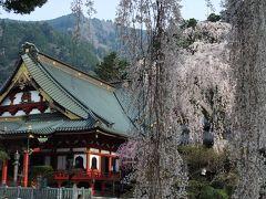 2010.3 山梨~身延山しだれ桜