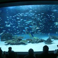 サンシャイン水族館へ(2014年2月)