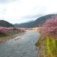 日帰りバスツアーで伊豆・河津桜をお花見散歩〜2014.3.7〜
