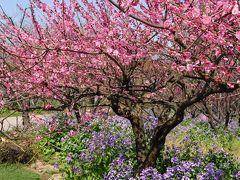 上海★7年目の春!梅の花見 @ 世紀公園