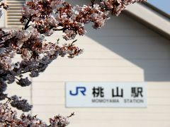 JR桃山駅の寒桜…7分咲き