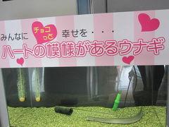 滋賀県 琵琶湖・博物館・クラブハリエなどウロウロ漫遊記