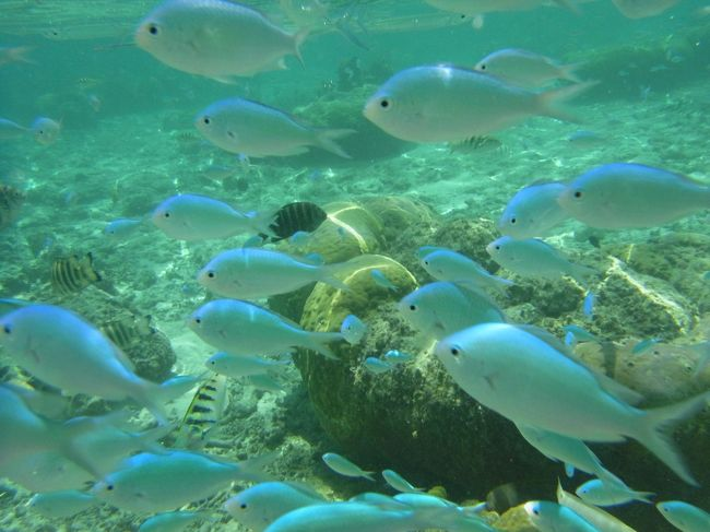 グアムで魚になる①の続きです。